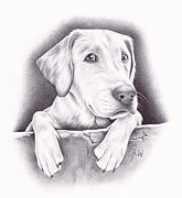 Puppy Drawings - Riley by Jamie Warkentin