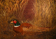 Patrick Paintings - Ringneck Pheasant by Patrick ODriscoll