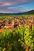 Grape Vineyard Framed Prints - Riquewihr Alsace Framed Print by Brian Jannsen