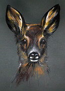 Deer Pastels - Roe Deer by Angel  Tarantella