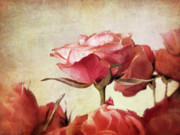 Textured Floral Digital Art Prints - Romantic Roses Print by Jessica Jenney