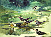 Julianne Felton - Royal Terns and Black...