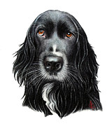 Portraiture Drawings Prints - Rummy Print by Danielle Haney