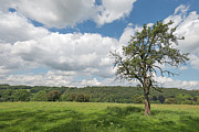 Limburg Photo Posters - Rural landscape in summer Poster by Jan Marijs