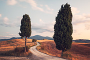 Tuscan Sunset Framed Prints - Rural road with cypress tree in Tuscany Italy Framed Print by Matteo Colombo