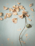 Rose Petals Posters - Scattered Poster by Amy Weiss