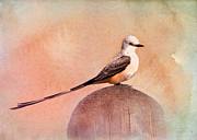 Betty LaRue - Scissor-tailed Flycatcher