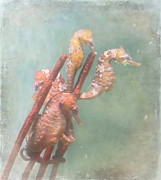Seahorses Prints - Sea Horses Print by Angie Vogel