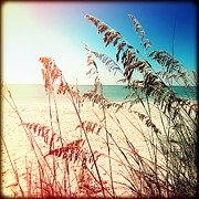 Florida Flowers Posters - Sea Oats Poster by Chris Andruskiewicz