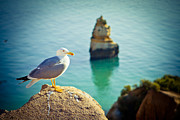 Sunlight Pyrography Posters - Seagull On The Rock Poster by Raimond Klavins