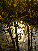 Tara Lynn - Setting Sun 5