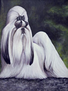 Breeds Originals - Showdog Shih Tzu by Melinda Saminski