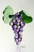 Purple Grapes Framed Prints - Sour Grapes Framed Print by Joe Prater