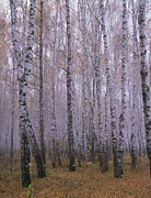 Autumn Metal Prints - Spasskoye Lutovinovo Metal Print by Anonymous