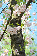 Angela Doelling AD DESIGN Photo and PhotoArt - Spring