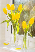 Spring Tulips Print by Christopher and Amanda Elwell