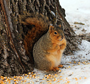 Lori Tordsen - Squirrel