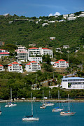 Port Prints - St Thomas USVI Print by Amy Cicconi