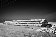 Harsh Conditions Prints - stack of frozen snow covered hay bales in a field Forget Saskatchewan Canada Print by Joe Fox