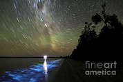 Gippsland Prints - Star Trails And Bioluminescence Print by Philip Hart