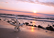 Starfish On The Beach At Sunset Print by Michal Bednarek