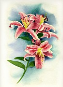 Flower Still Life Prints Framed Prints - Stargazer Lilies Framed Print by Brett Winn