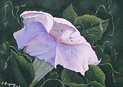 Blooming Paintings - Summer Lily by Sharon Duguay
