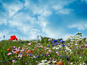Summer Season Landscapes Prints - Summer meadow Print by Heike Hultsch