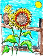 Farms Drawings Framed Prints - Sunflowers  Framed Print by Jon Baldwin  Art