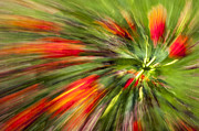 Green Greeting Cards Prints - Swirl of Red Print by Jon Glaser