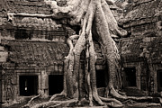 Tree Roots Photo Prints - Ta Prohm Temple in Cambodia Print by Artur Bogacki