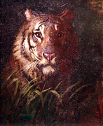 Cora Wandel Framed Prints - Thayers Tigers Head Framed Print by Cora Wandel