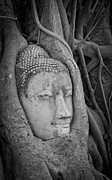 Buddhism Sculpture Prints - The ancient city of Ayutthaya Print by Thosaporn Wintachai