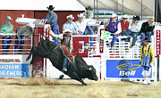 Rodeo Pastels Posters - The Black Bull Poster by Karen Elkan