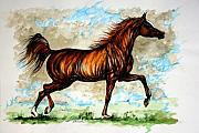 Wild Horses Drawings Metal Prints - The Chestnut Arabian Horse Metal Print by Angel  Tarantella