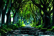 The Dark Hedges Posters - The Dark Hedges Poster by Mark Hinds
