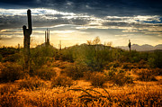 Sonoran Desert Prints - The Desert Golden Hour  Print by Saija  Lehtonen