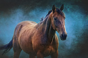 Angela Doelling AD DESIGN Photo and PhotoArt - The horse