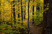 Saija  Lehtonen - The Magic Forest