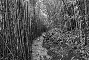 Jamie Pham - The magical bamboo forest of Maui near the Na