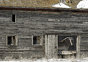 Heavy Horse Digital Art Posters - The Old Barn Poster by Judy Wood