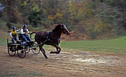 Horse And Cart Photo Metal Prints - The Race Is On Metal Print by Skip Willits
