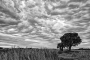 Clouds Posters Prints - The Right Tree Print by Jon Glaser