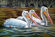 Migratory Bird Painting Framed Prints - Three Amigos Framed Print by Phyllis Beiser
