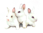 Pink Ears Prints - Three Bunnies Print by Robert Foster