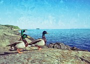 Randy Wachtin - Three Mallard Ducks On...