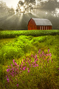 Tennessee Barn Prints - Touched by the Sun Print by Debra and Dave Vanderlaan