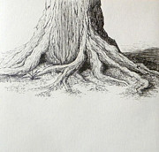 Nature Study Drawings Prints - Tree Base ink study Print by Rebekah Reed