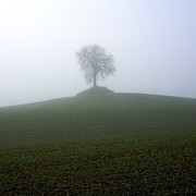 Fog Art - Tree by Bernard Jaubert