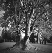 Big Tree Photos - Tree by Les Cunliffe